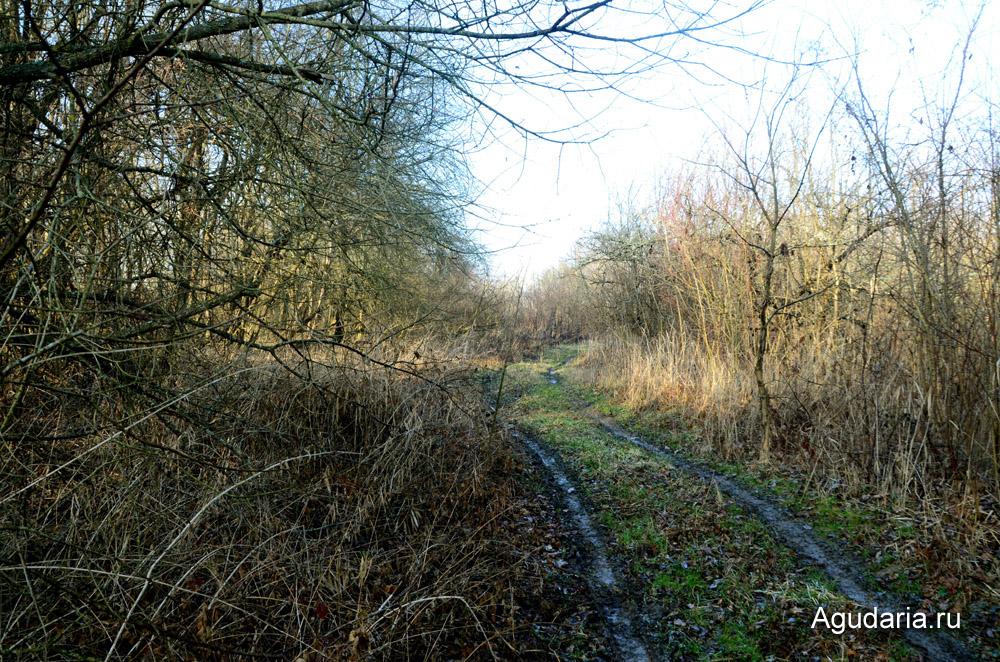 Дорога к Родовому поместь. АгудариЯ. Слева - спуск к реке, справа - яблоневый сад.