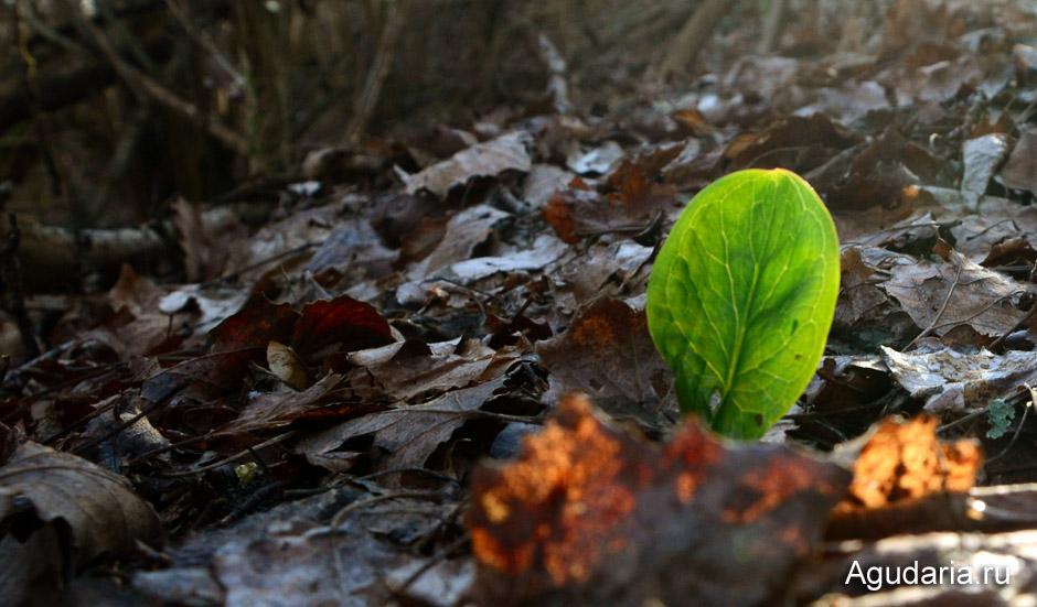 Весна в Краснодарском крае начинается в феврале...