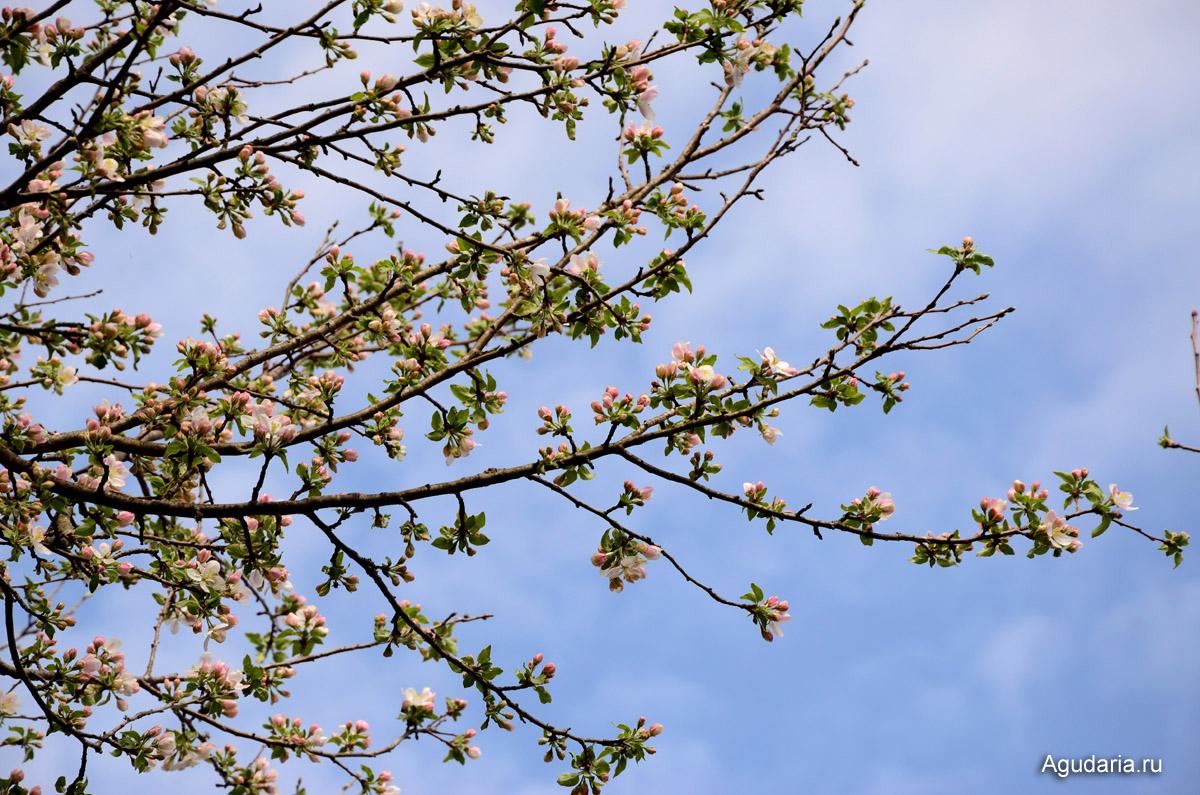 Цветут сады в начале апреля! Кубань - рай для садоводов.