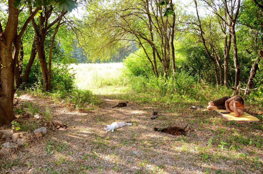 Жара! Большую часть дня наши кошачьи проводят на земле в тени деревьев. Ну и я, глядя на них, сбоку примостился))