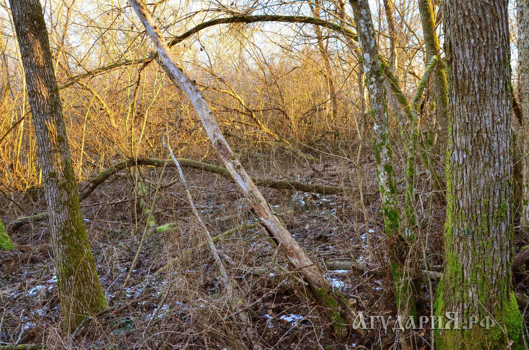 Запасы дров на участке. Поместье АгудариЯ